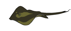Illustration of a common stingray