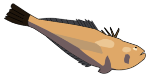 Illustration of a weever fish